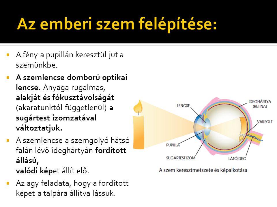 mennyi látás áll helyre égés után magas myopia kezelési módszerek