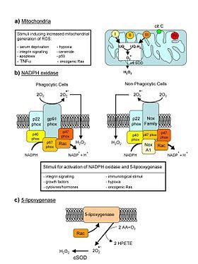 B6-vitamin | vilagitojegkocka.hu