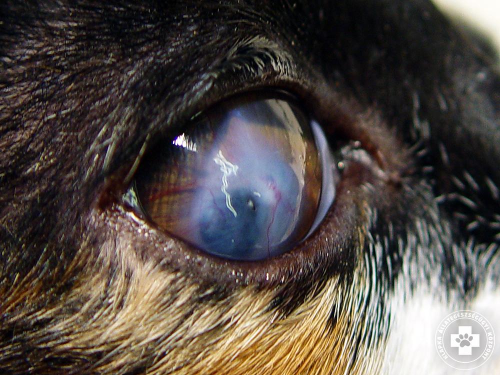 tabletták csökkent látáshoz