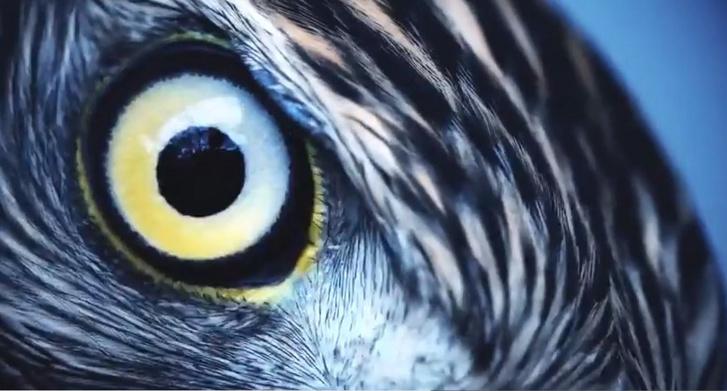 1. látás, ahogyan az ember látja