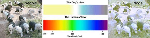 mi a dikromatikus látás