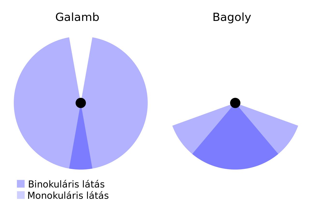 binokuláris látás feltételei