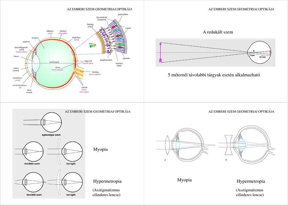 érzékszervi funkció látás szemész Rosemblum
