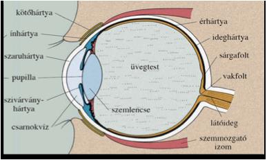 gyógyítható-e látás műtét nélkül?