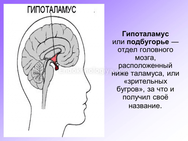 hipotalamusz és látás miután a betegség látása csökkent