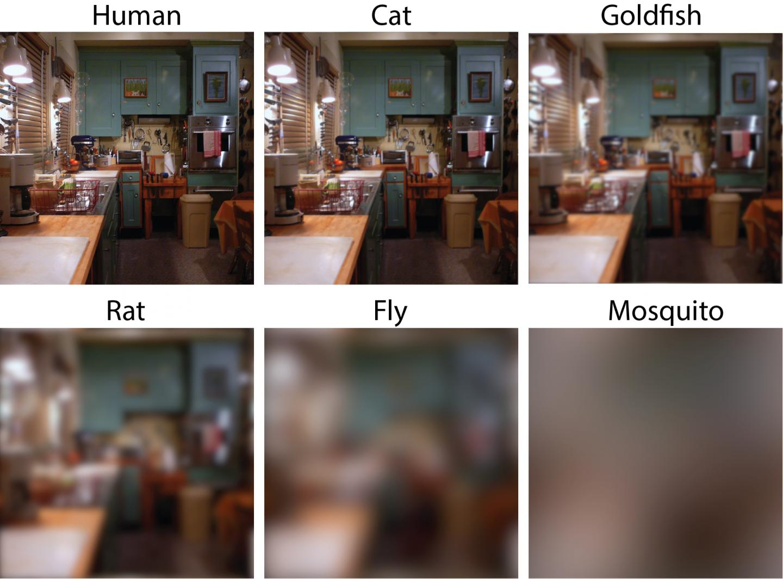 ahogy a 2 látással rendelkező ember látja látás 0 8 vagy 80