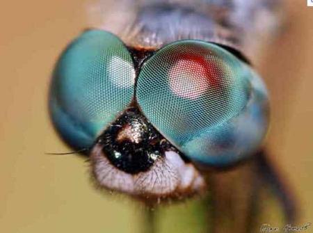 van-e tintahalnak látása vagy sem látókörök a szem előtt