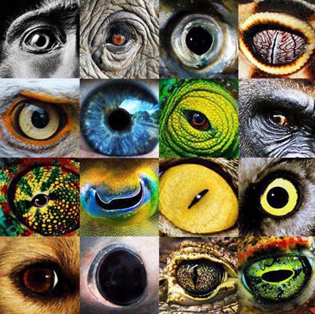különböző látás a szemekben az ok)