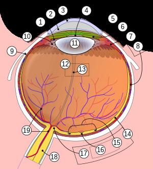 sejtes gyenge látás