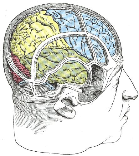 látási szervek rajzokban abbahagyta a látást