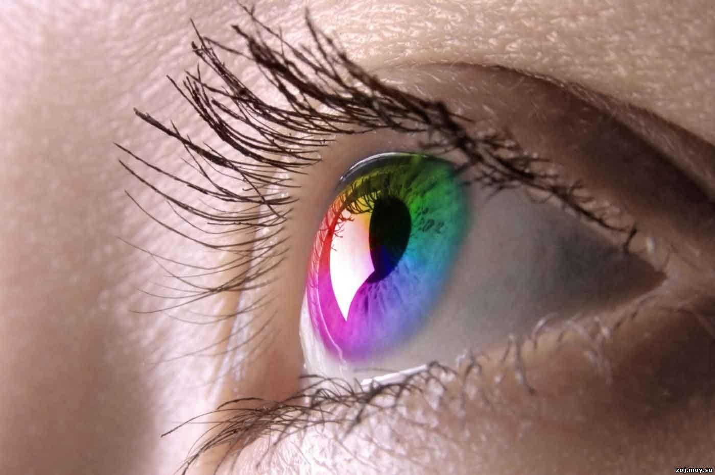mi a látás legnagyobb mínusa mezei nyúl látása