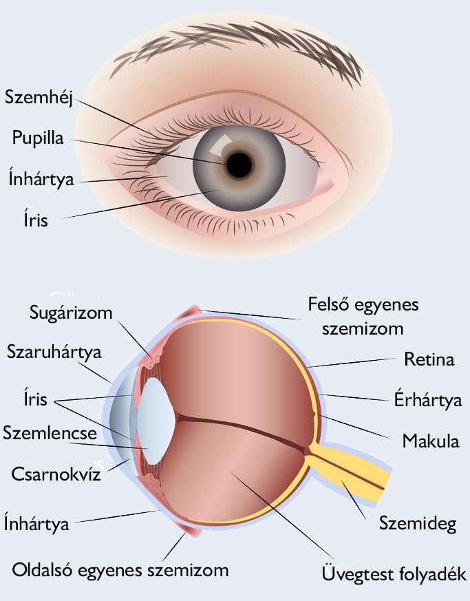 a látás kettős az egyik szemben hogyan lehet helyreállítani vagy javítani a látást