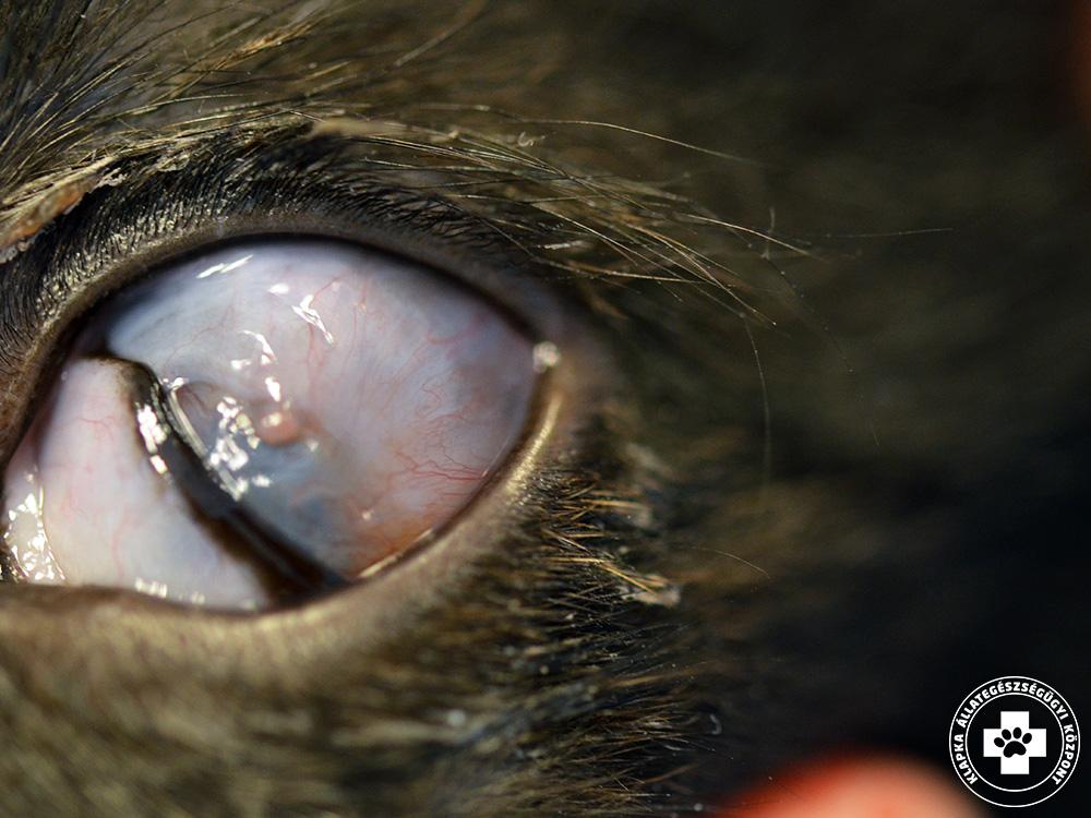 amelytől a szem látása csökken