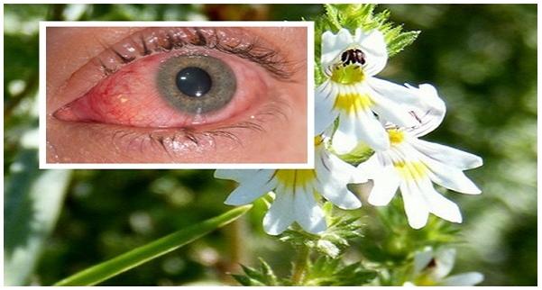miért jó a látás szemtabletták a látás javítására