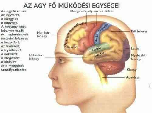 Látás és az emberi agy