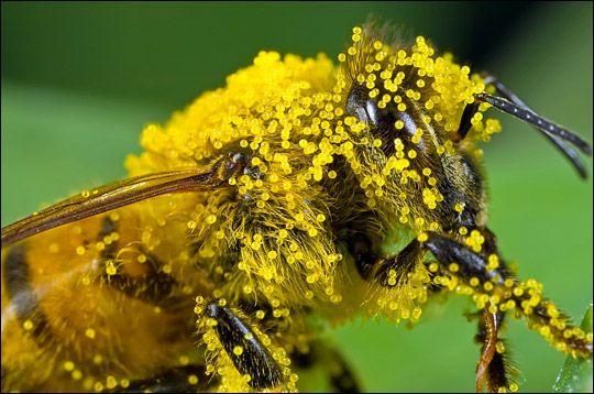 méh pollen a látáshoz ha a látás romlik