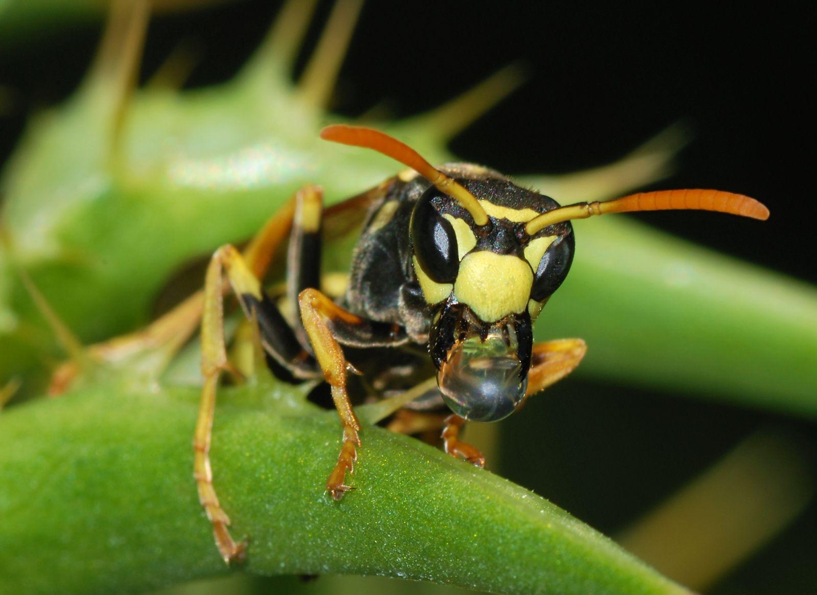 méhcsípés a szem elől szembetegségek és a látás helyreállítása
