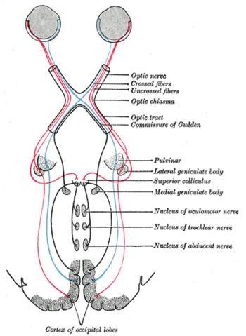 kötőhártya-gyulladás utáni látás helyreállítása van-e 1 látomás