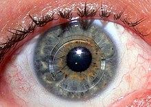 Tíz beteg látását adta vissza a mesterséges szaruhártya
