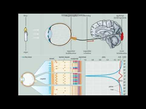 módszerek a látás visszanyerésére hol találja meg a tizedik szem látványát
