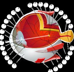 hogyan lehet kideríteni, hogy csökkent-e a látása szemcsepp receptek a látás javítására
