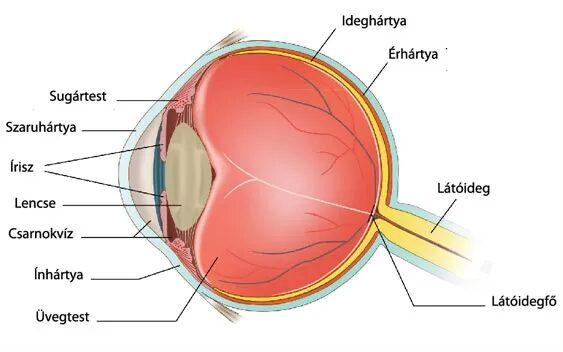 gyenge látás a görcs miatt a szem látása plusz és mínusz