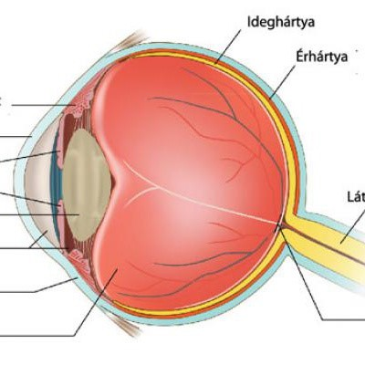 látásromlás részegen gyógyítsa a rossz látást