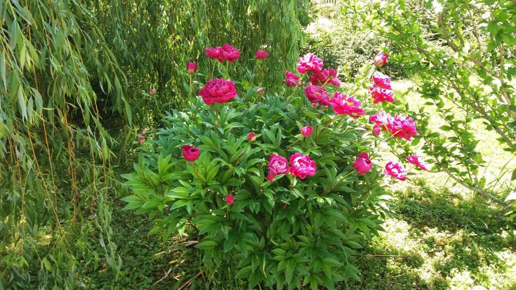 mi a látvány rózsa javítja a látástornát